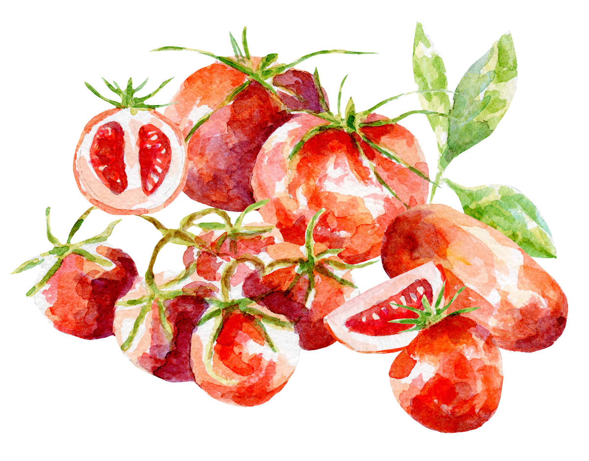 Watercolor illustration of tomatoes