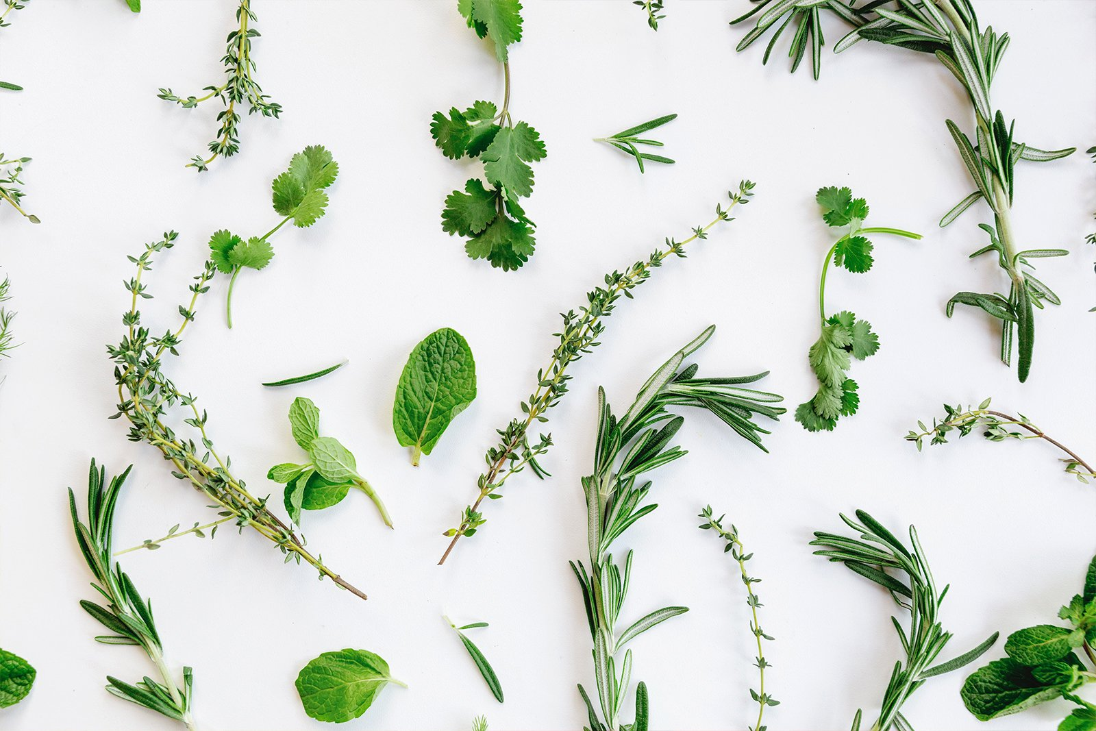 Italian Herbs on white countertop